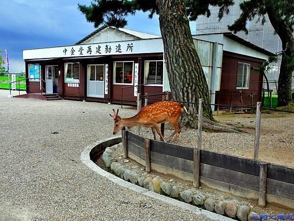 3興福寺內鹿群.jpg