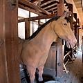 8彥根城馬屋.jpg