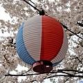 21海津大崎櫻花季燈籠-1.jpg