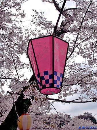 22海津大崎櫻花季燈籠-2.jpg