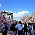 19大阪造幣局賞花人潮.jpg