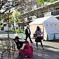 26大阪造幣局櫻花俳句投句所.jpg