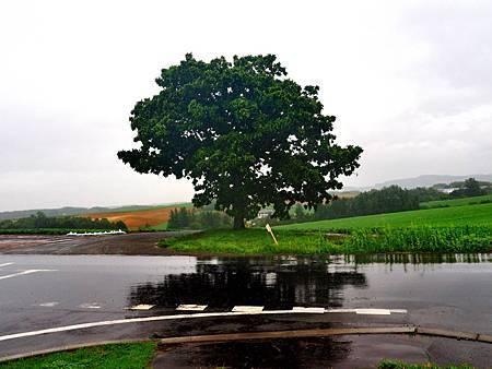 73Seven Star Tree.jpg