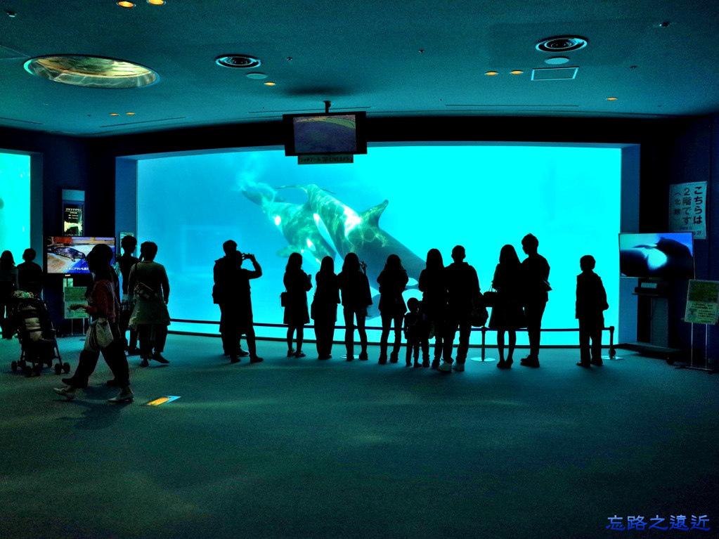 14名古屋港水族館逆戢鯨池.jpg