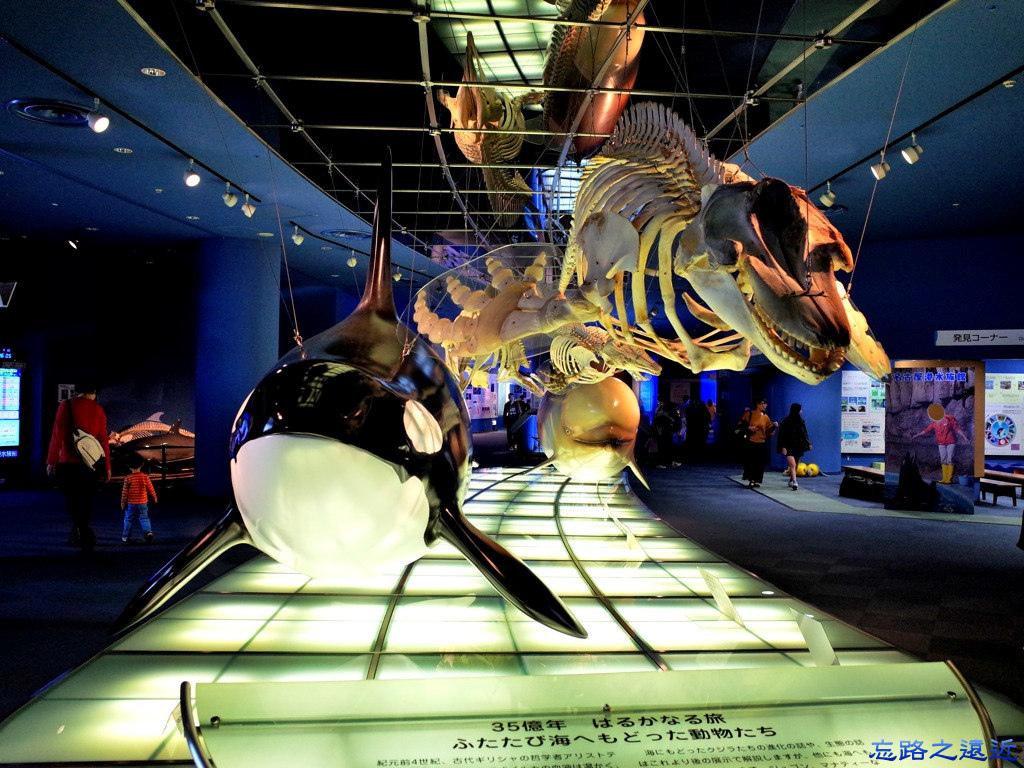 18名古屋水族館進化之海展示.jpg