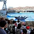 22名古屋水族館海豚表演-2.jpg