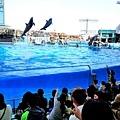23名古屋水族館海豚表演-3.jpg