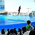 24名古屋水族館海豚表演-4.jpg