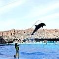 27名古屋水族館海豚表演-7.jpg