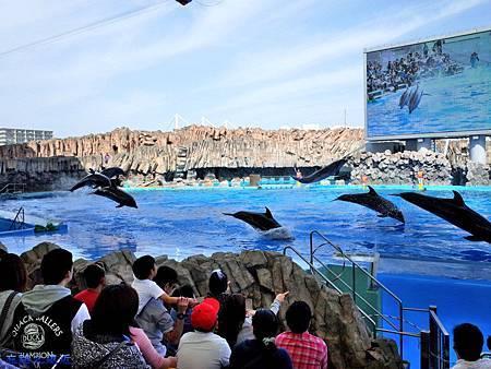 28名古屋水族館海豚表演-8.jpg