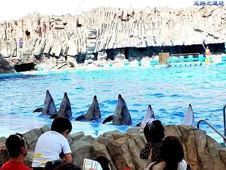 29名古屋水族館海豚表演-9.jpg