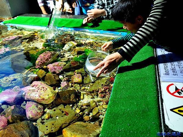 41名古屋水族館觸摸池.jpg