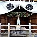21針綱神社神馬.jpg