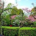 6犬山城庭園.jpg