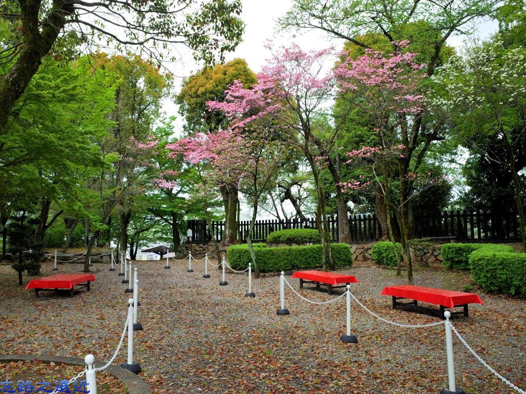 34犬山城往七曲門櫻花.jpg