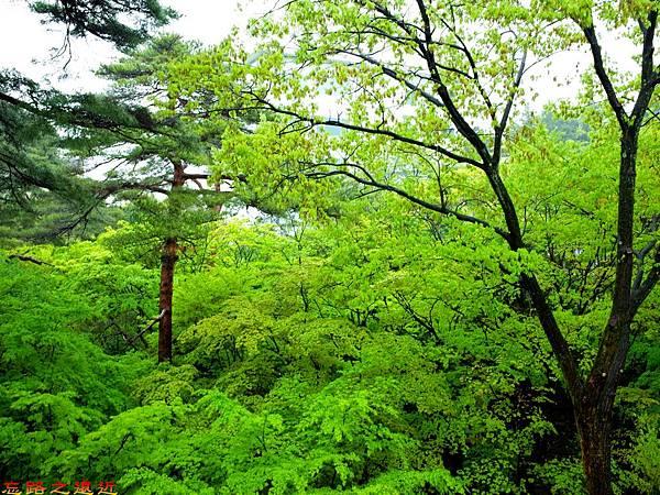70無何有黃蘗陽台望庭園-2