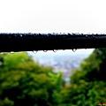73無何有黃蘗陽台雨滴
