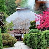 15安樂寺本堂.jpg