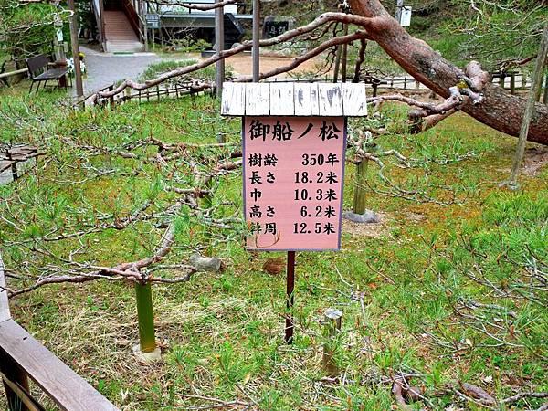 10常樂寺御船之松說明牌.jpg