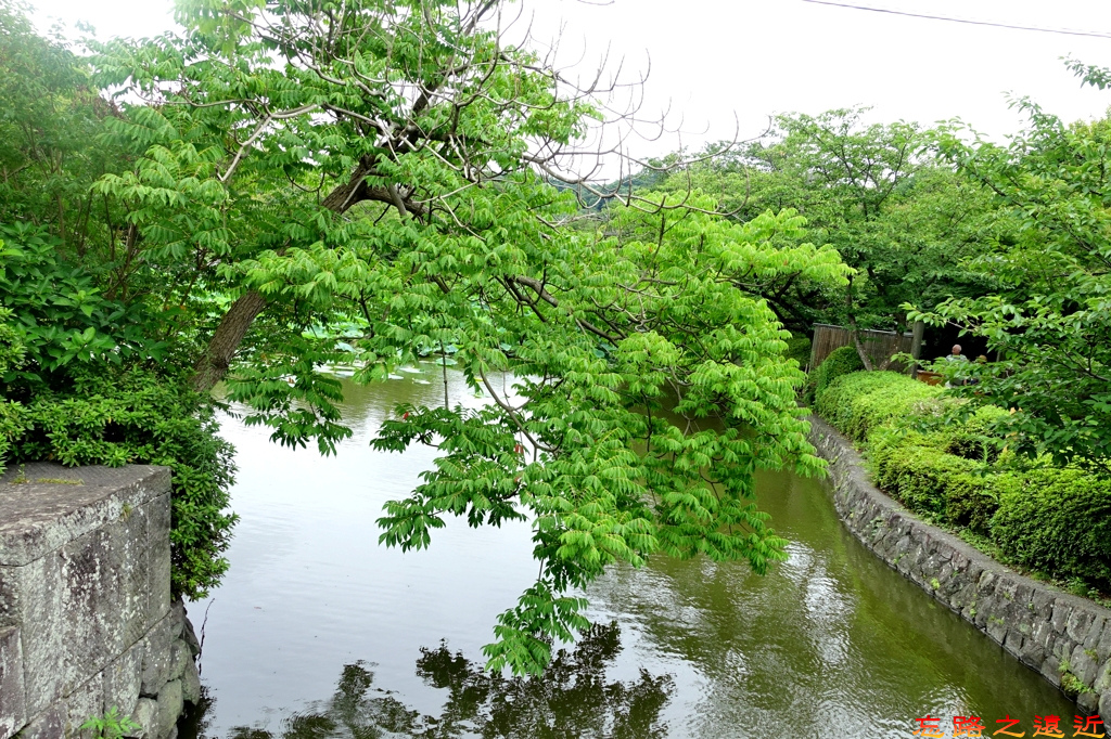 14鶴岡八幡宮源平池-1.jpg