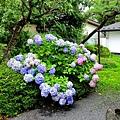 17一關松榮堂庭園-3.jpg