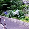 2游泉前道路.jpg