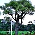 25千秋公園入口大守門堀.jpg