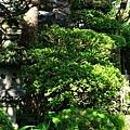 45角館外町史料館庭園-2.jpg