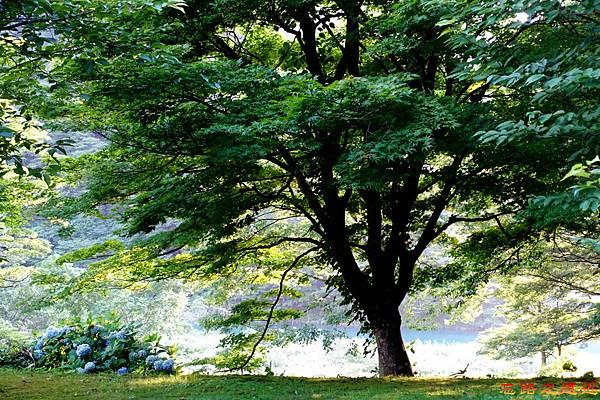 46都わすれ房間庭園-楓樹.jpg