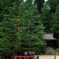 18高野山壇上伽藍三鈷之松.jpg