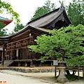 31高野山壇上伽藍西行櫻-夏.jpg
