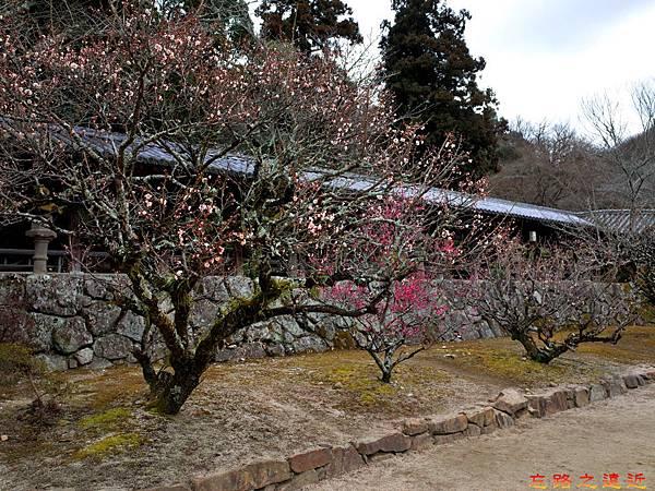 41吉備津神社迴廊外櫻花-1.jpg