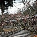 42吉備津神社迴廊外櫻花-2.jpg