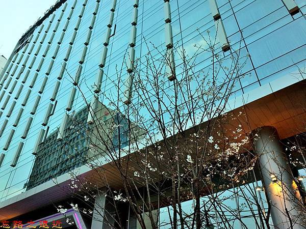 3首爾九樹飯店入口櫻花樹.jpg