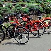 31大石公園內自行車.jpg