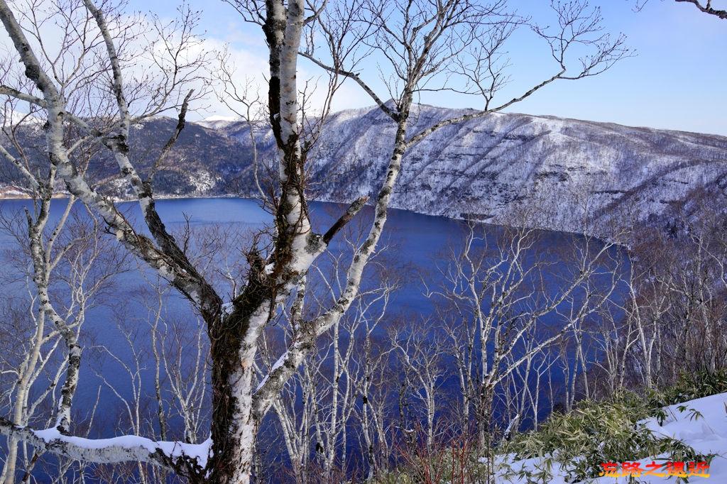 10摩周湖第三觀景台植物.jpg