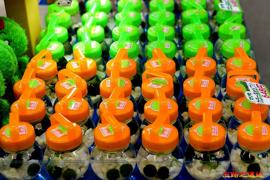 14摩周湖第三觀景台賣店內綠藻球.jpg