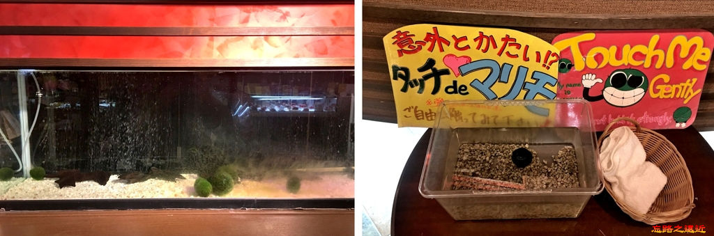 29鶴雅通道毬藻觸摸區.jpg