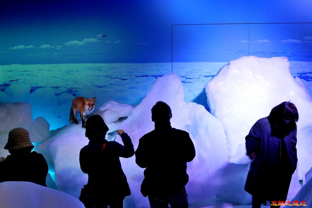 19都山流冰館地下室鄂霍次克動物展示流冰體感走廊-2.jpg