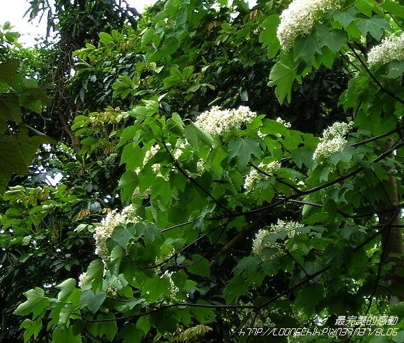 flower17.jpg