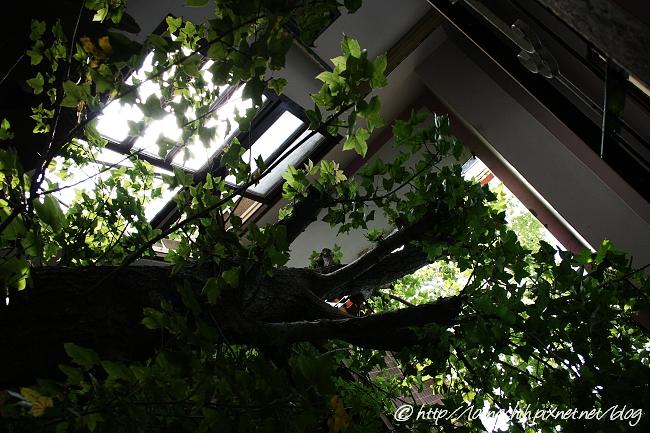 hsieh_house303.jpg
