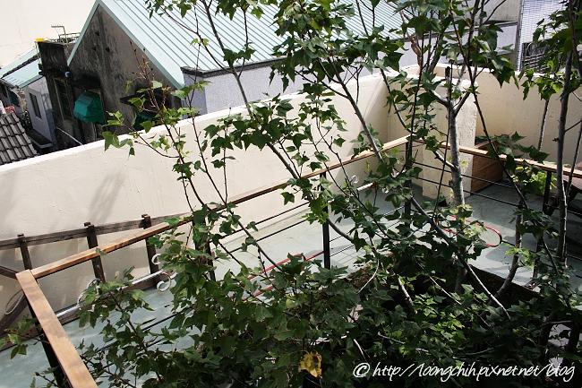 hsieh_house249.jpg