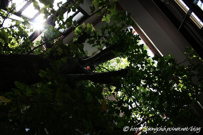 hsieh_house298.jpg