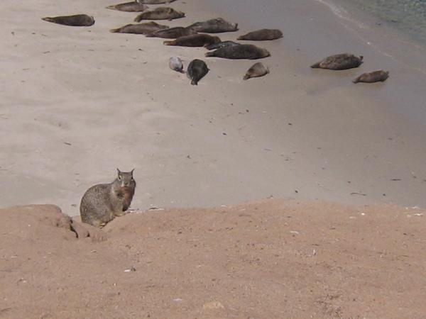 海灘上的海松鼠跟海豹