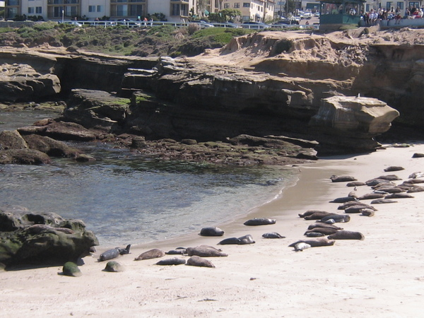 Children's Cove