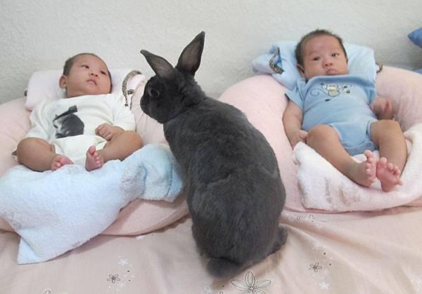 雙寶2個多月大 第一次跟小松近距離接近