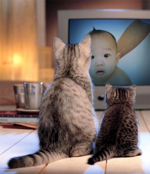 小貓看小比.jpg