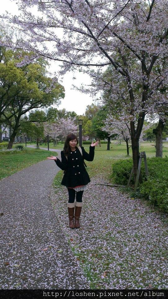 大阪城櫻花