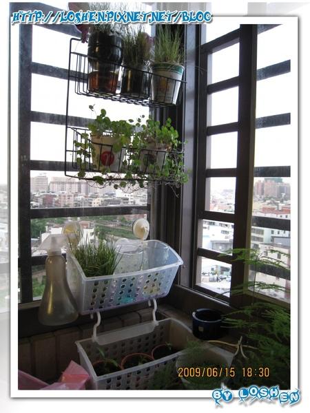 綠意盎然小陽台-先將小盆盆栽安置好