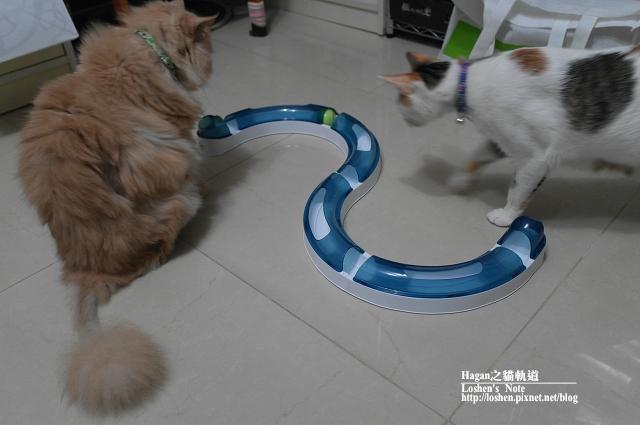 貓軌道新鮮貨